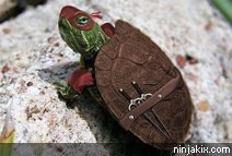 Ninja turtle IRL (in real life)