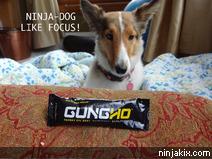 Ninja-dog like focus